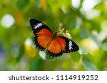 butterflies are orange and...   Shutterstock . vector #1114919252