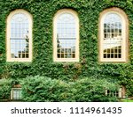 ivy wall in harvard at... | Shutterstock . vector #1114961435