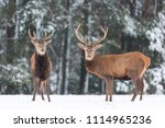 winter wildlife landscape.... | Shutterstock . vector #1114965236