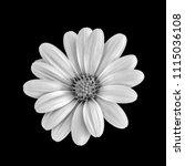 fine art still life flower... | Shutterstock . vector #1115036108