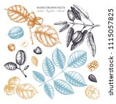 vector collection of hand drawn ... | Shutterstock .eps vector #1115057825
