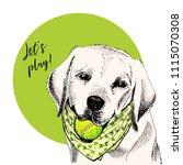 vector portrait of labrador... | Shutterstock .eps vector #1115070308