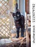 Small photo of snoopy black kitty cat