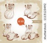 fennel bulbs set. hand drawn... | Shutterstock .eps vector #1115123492
