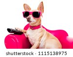 chihuahua dog watching tv or a... | Shutterstock . vector #1115138975