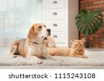 Stock photo adorable cat and dog lying on rug at home animal friendship 1115243108