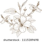 hibiscus flowers vector by hand ... | Shutterstock .eps vector #1115289698