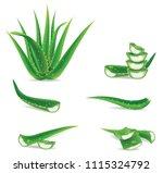aloe vera plant realistic set... | Shutterstock .eps vector #1115324792