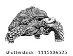 Stock vector graphical tortoise isolated on white background vector tattoo illustration 1115336525