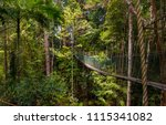 A beautiful atmospheric view of the dense rainforest and the suspension bridge which is part of the world