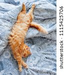 cute ginger cat lying in bed.... | Shutterstock . vector #1115425706