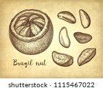 ink sketch of brazil nut. hand...   Shutterstock .eps vector #1115467022