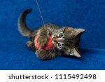 cat with pink woolen ball ... | Shutterstock . vector #1115492498