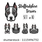 staffordshire terrier dog.... | Shutterstock .eps vector #1115496752