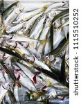 Small photo of Horse mackerel fish aka istavrit
