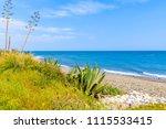 agave plant on beach near... | Shutterstock . vector #1115533415