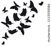 black butterfly  isolated on a... | Shutterstock .eps vector #1115550086