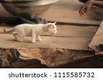 adorable animals   photo of a... | Shutterstock . vector #1115585732