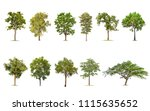 Isolated Tree White Background Collection - Fine Art prints