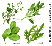 set of realistic herbs and... | Shutterstock .eps vector #1115808875