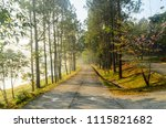 landscape of pine trees forest...   Shutterstock . vector #1115821682