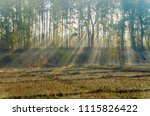 nature tree and the stump of...   Shutterstock . vector #1115826422