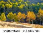 aspen grove at autumn in rocky... | Shutterstock . vector #1115837708