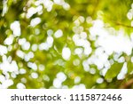 natural lighting in the garden  ... | Shutterstock . vector #1115872466