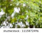 natural lighting in the garden  ... | Shutterstock . vector #1115872496