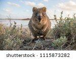 country  australia  rottnest...   Shutterstock . vector #1115873282