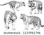 vector drawings sketches... | Shutterstock .eps vector #1115961746