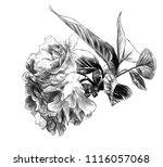 branch with cherry blossoms and ... | Shutterstock .eps vector #1116057068