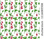 seamless pattern  barberry hand ... | Shutterstock .eps vector #1116085508