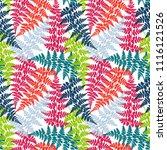 fern frond herbs  tropical... | Shutterstock .eps vector #1116121526