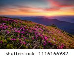mountains during flowers... | Shutterstock . vector #1116166982