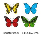 butterfly set  papilio machaon  ... | Shutterstock .eps vector #1116167396