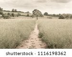 isolated single tree in middle... | Shutterstock . vector #1116198362