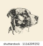 dog head. engraving style.... | Shutterstock .eps vector #1116209252