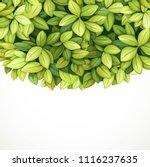 crown tree from green oblong... | Shutterstock .eps vector #1116237635