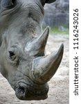 white rhinoceros or square...   Shutterstock . vector #1116243026