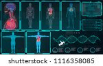 x ray body collections in... | Shutterstock .eps vector #1116358085