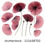 Stock photo dry pressed poppy flowers isolated on white background 111638702