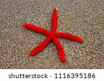 rearrest red starfish from the... | Shutterstock . vector #1116395186