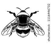 bumblebee hand drawn vector... | Shutterstock .eps vector #1116446732