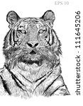 Tiger sketch line with Vector EPS 10