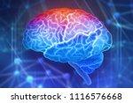 human brain on a blue...   Shutterstock . vector #1116576668
