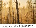midsummer morning sunrise in... | Shutterstock . vector #1116605396