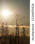 midsummer morning sunrise in... | Shutterstock . vector #1116605426