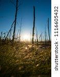 midsummer morning sunrise in... | Shutterstock . vector #1116605432