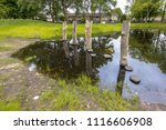 stepping stones in a pond as... | Shutterstock . vector #1116606908